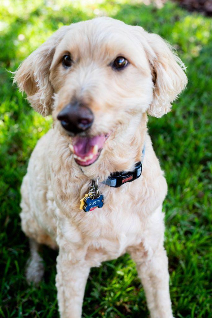 Laurel Oak Inn - Rusty (the dog) the concierge